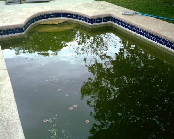 Dark Green Pool - Acquality Pool Service