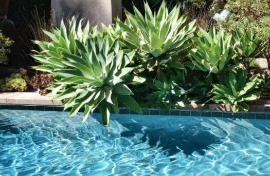 Architectural Look Pool Landscaping